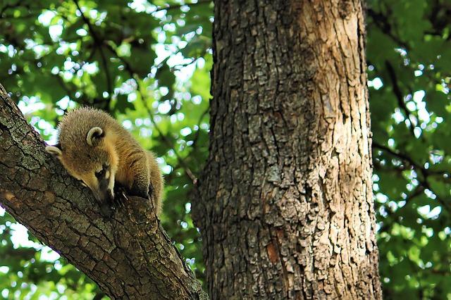 nosál na stromě